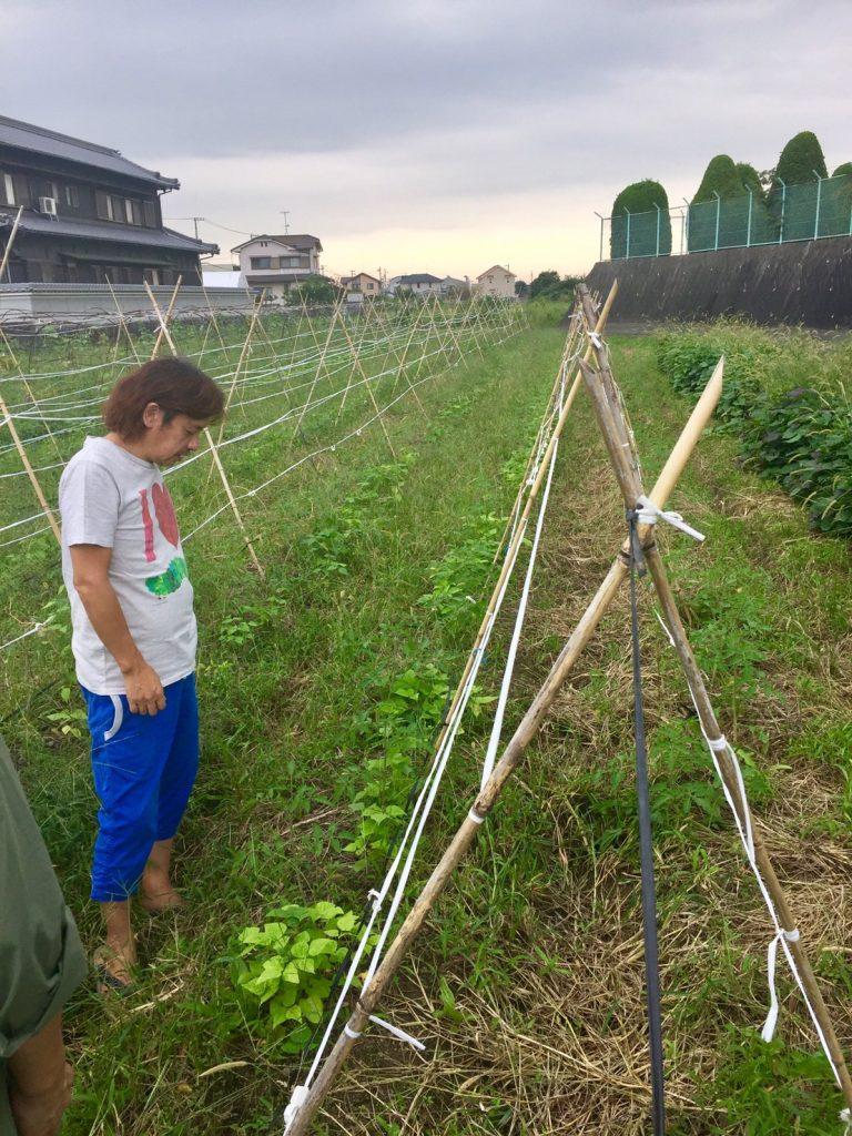 佐伯康人さんの自然栽培の畑
